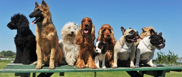 What Dogs are Eligible?