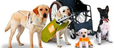 Who Qualifies for a Service Dog?