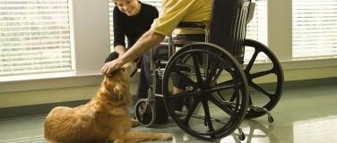 Therapy vs. Service Dog
